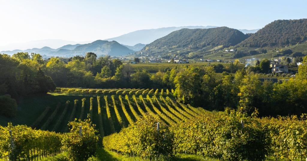 Viñedo de Prosecco en Valdobbiadene