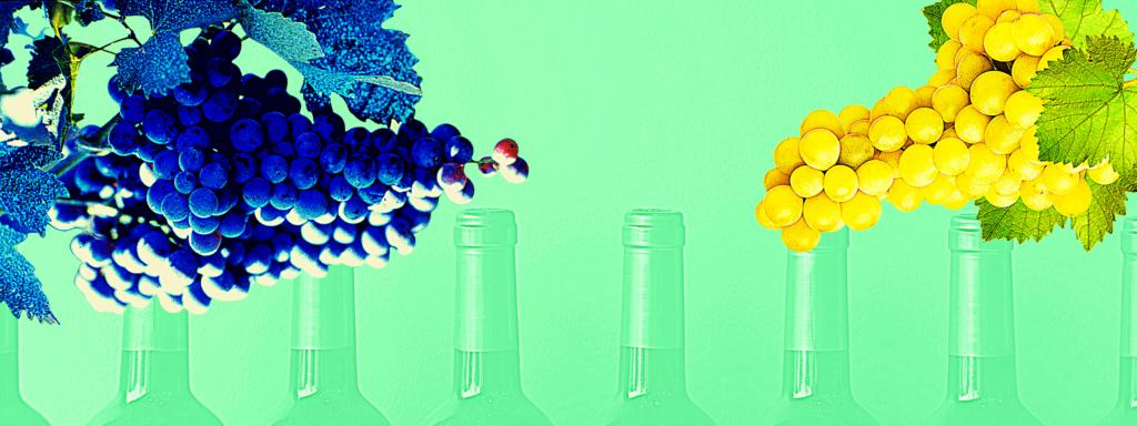 variedades de vino uvas